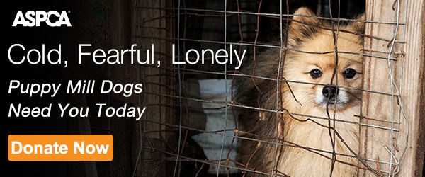 """A dog behind a fence with the text """"Puppy Mill Dogs Need You Today."""""""