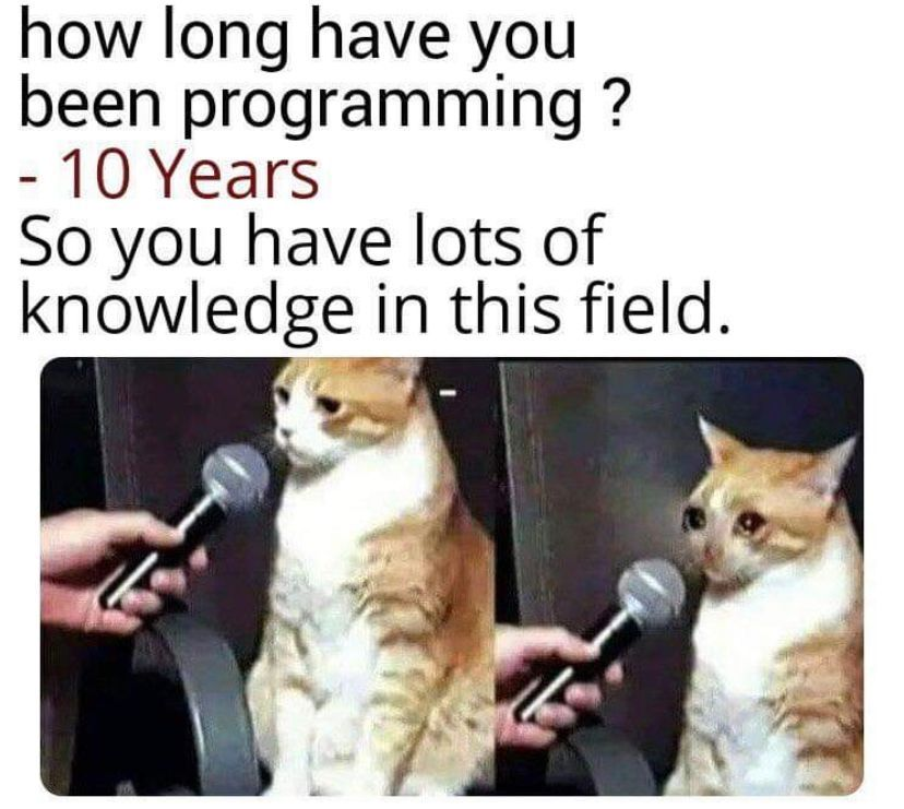 A cat crying over his 10 years of experience.